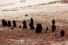 Difese di mare sul faggio Fotografie Stock Libere da Diritti