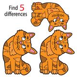 Différences de chaton Photos libres de droits