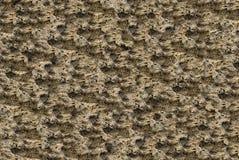 Différent inégal de texture de pierre de chaux de couleur beige naturelle de lumière Images libres de droits