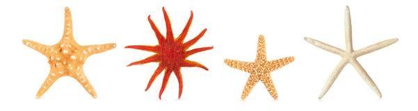 Différentes étoiles de mer dans une rangée Image stock
