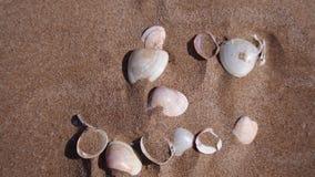 Différentes coquilles dans le sable, Espagne photo libre de droits