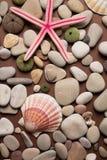 différentes coquilles et étoiles de mer Image libre de droits