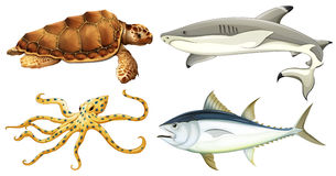 Différentes créatures de mer Photo stock