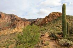 Différentes espèces de cactus en monument national de cactus de tuyau d'organe, Arizona, Etats-Unis Images stock