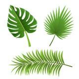 Différentes espèces de feuilles de palmier d'isolement sur le blanc Photographie stock libre de droits