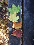 Différentes feuilles colorées sur un banc Photographie stock