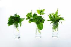 Différentes herbes Image stock
