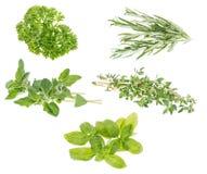 Différentes herbes d'isolement sur le blanc Photo libre de droits