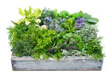 Différentes herbes dans la boîte de jardin Photographie stock libre de droits