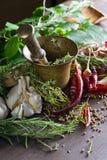 Différentes herbes et épices Photographie stock libre de droits