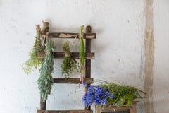 Différentes herbes fraîches Image stock