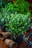 Différentes herbes pour la plantation Image stock