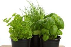 Différentes herbes vertes pour la cuisson Image libre de droits