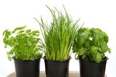 Différentes herbes vertes pour la cuisson Photos stock