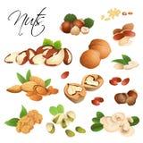 Différentes noix sur le fond blanc Photos stock