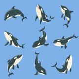 Différentes positions de corps de baleine arctique d'orque réglées des illustrations illustration libre de droits