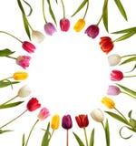 Différentes tulipes de couleur sous forme de cercle Photo stock