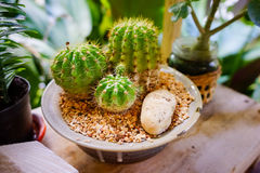 Différentes usines de cactus dans des pots de fleurs sur la table en bois Image stock