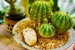 Différentes usines de cactus dans des pots de fleurs sur la table en bois Photo stock