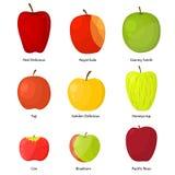 Différentes variétés de pommes avec un ensemble de description Vecteur illustration de vecteur