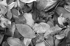 Différentes vues du paysage d'automne Images stock