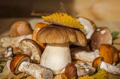Différents champignons comestibles Image stock