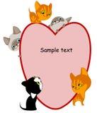 Différents chatons. La place pour votre texte entendent. Images stock