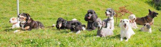 Différents chiens s'étendant dans l'arrière-cour photo stock