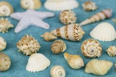 Différents coquillages sur un fond bleu photographie stock