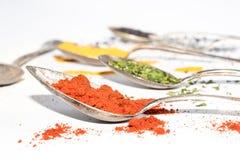 Différents genres d'épices sèches sur des cuillères en métal Photos libres de droits