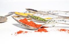 Différents genres d'épices sèches sur des cuillères en métal Images stock