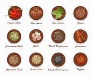 Différents genres d'épices sur le conseil en bois Illustration réaliste de vecteur Images libres de droits