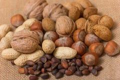 Différents genres de noix Photo stock