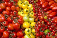 Différents genres de tomates Images libres de droits