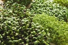 Différents genres de verts micro Photo stock