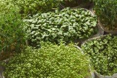 Différents genres de verts micro Photos stock