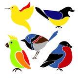 Différents oiseaux d'isolement sur le fond blanc Photos libres de droits