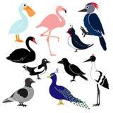 Différents oiseaux d'isolement sur le fond blanc Images libres de droits