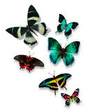 Différents papillons de couleur Images libres de droits