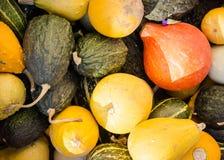 Différents potirons après récolte au soleil au marché 4 Image stock
