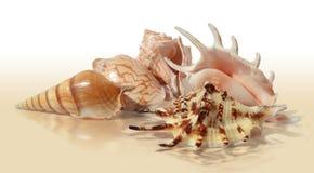 différents seashells Photos stock
