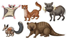 Différents types d'animaux sauvages illustration stock