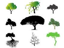 Différents types d'arbres Photos stock