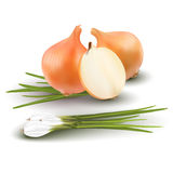 Différents types d'oignon sur le fond blanc Photos stock