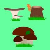 Différents types de champignons comestibles Photo stock