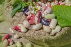 Différents types de fond de haricots Image libre de droits