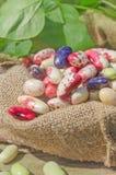 Différents types de fond de haricots Photos stock