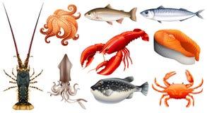 Différents types de fruits de mer illustration libre de droits