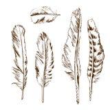 Différents types de plume d'oiseaux Photographie stock