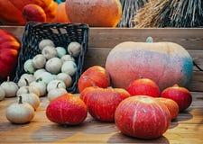 Différents types de potirons sur un compteur en bois potiron d'automne sur une table en bois Potiron pendant des vacances Photos stock